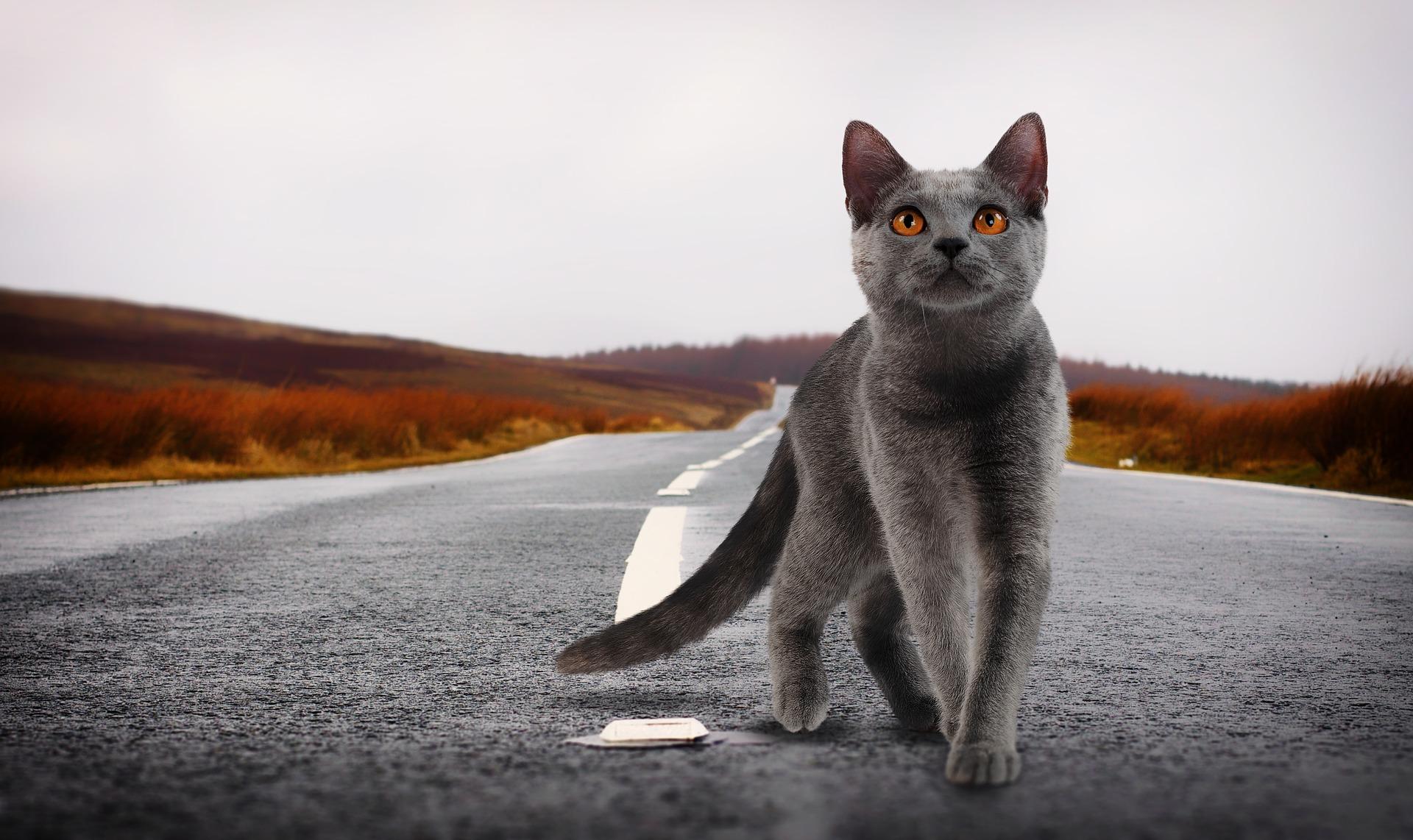 Cat 2988354 1920