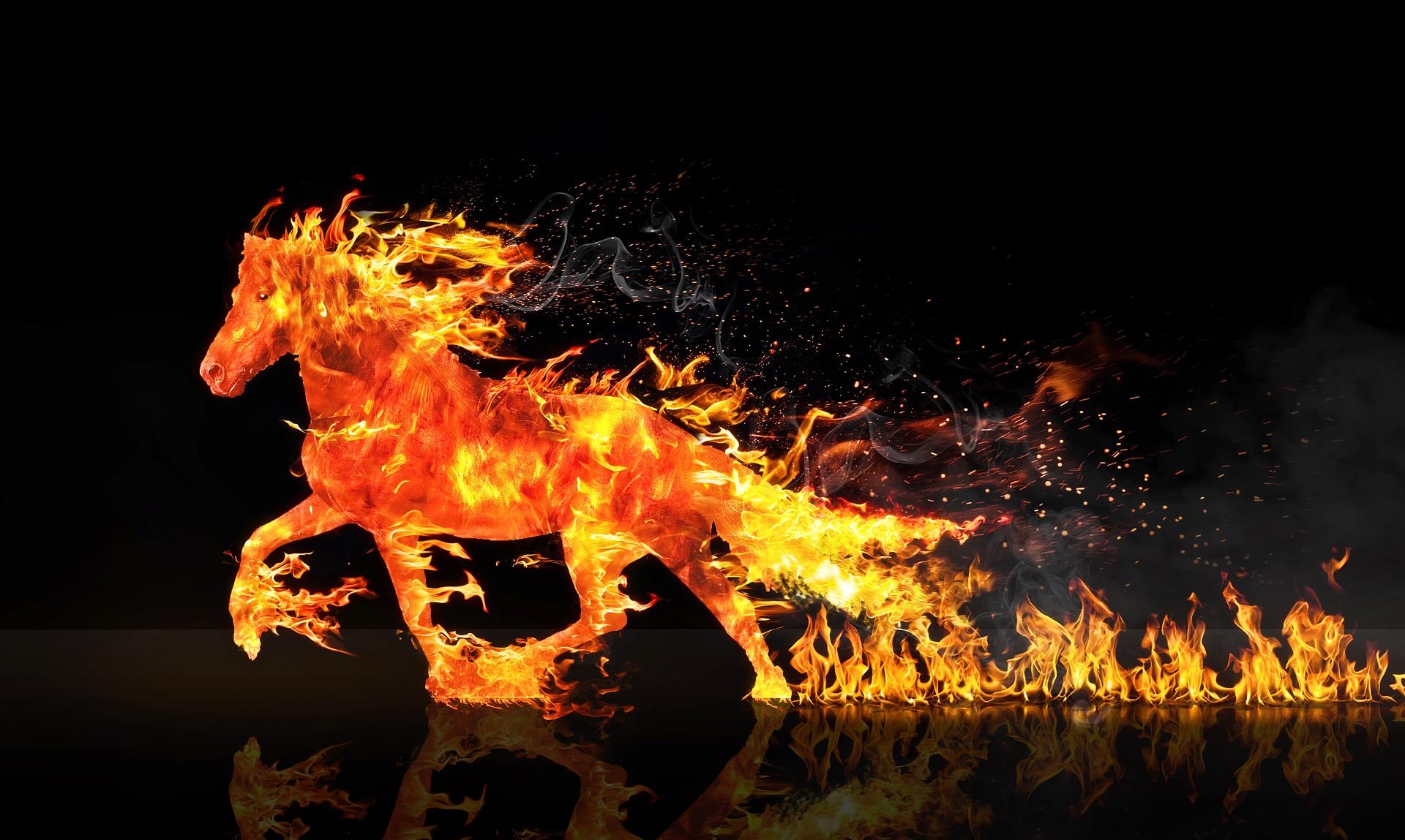 Fire horse 2492947 1920