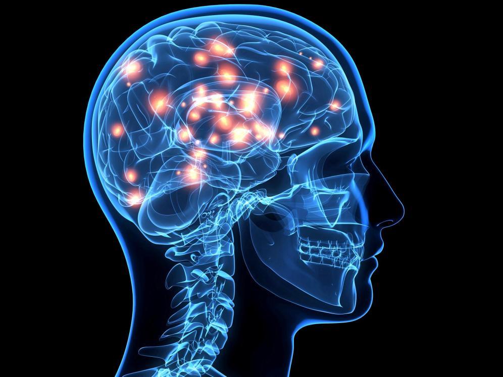 Por que el cerebro humano es tan diferente al de los animales