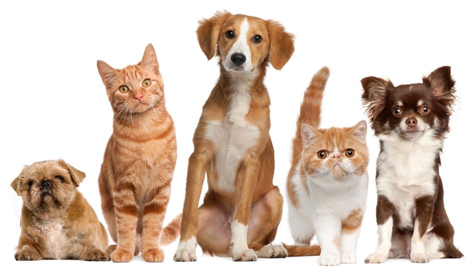Como transportar caes e gatos 1