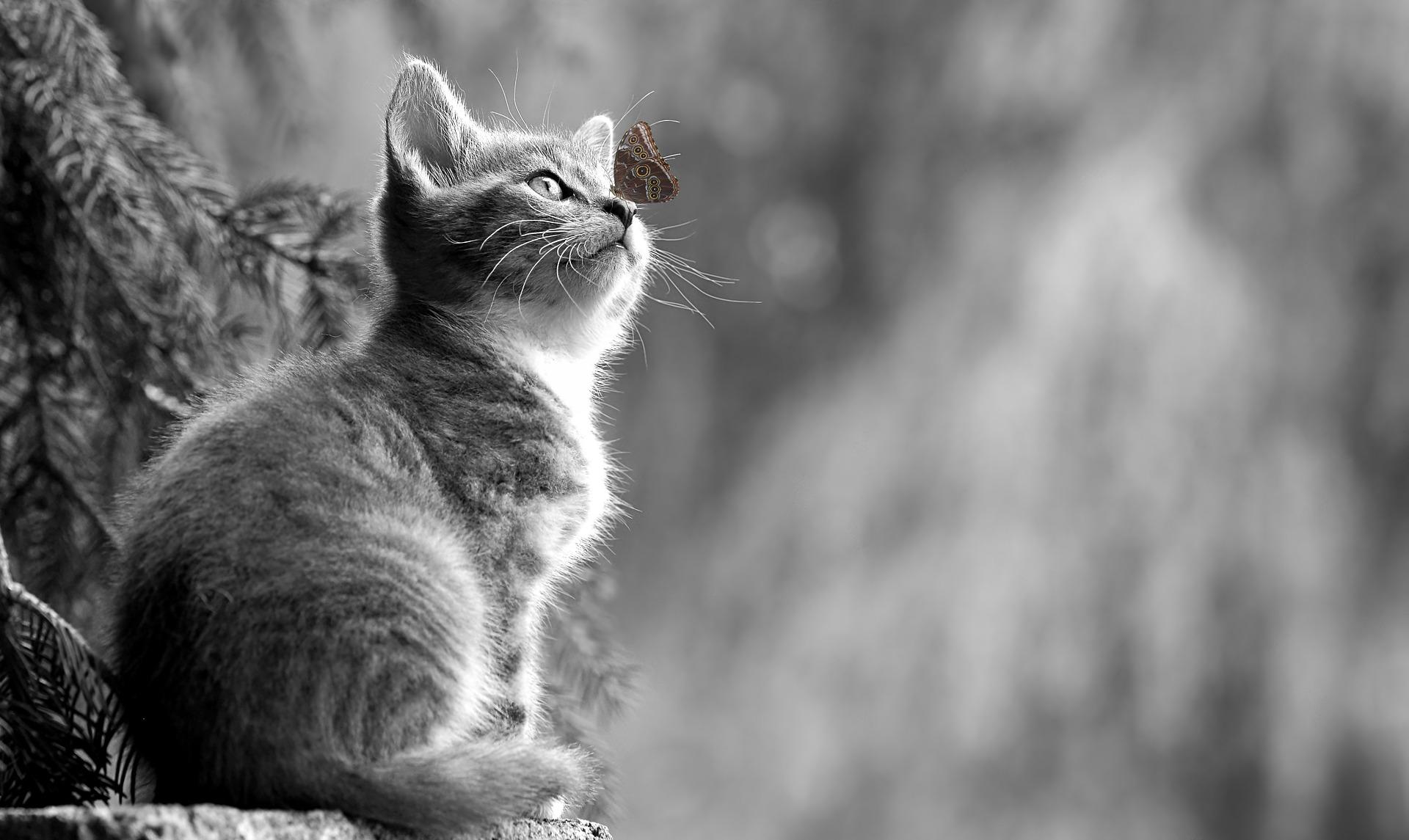 Cat 2810383 1920