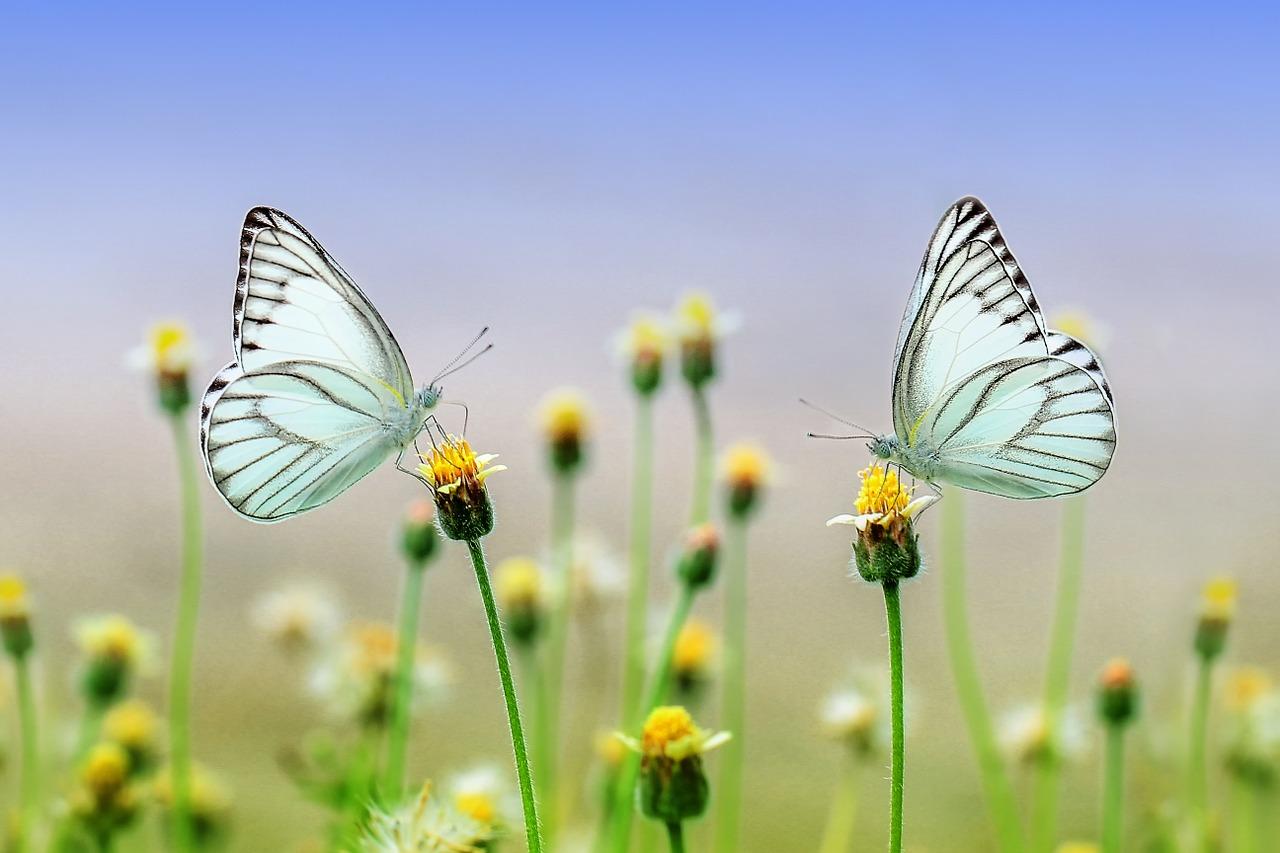 Butterfly 1127666 1280