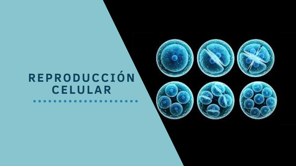 Reproducci%c3%93n%2bcelular imag %2bcurso