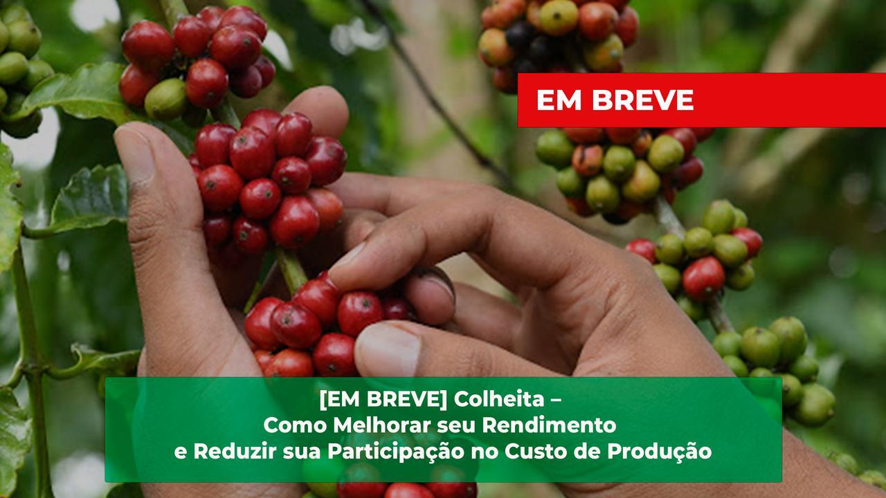 Colheita easy resize.com%2b 5